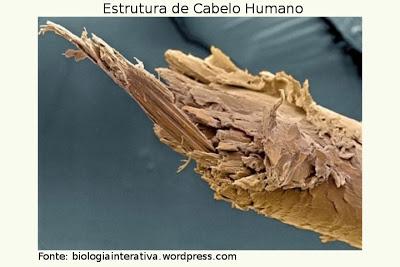 cabelo estrutura queratina