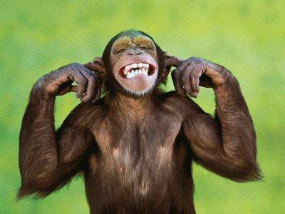 macaco ano